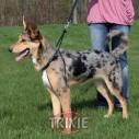 Trixie Arnés entrenam. Easy Walk Basic XL:55-80cm,25mm