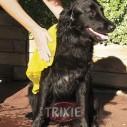 Trixie Toalla-paño para secado, 50x60 cm, amarilla