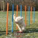 Trixie 12 Mástiles Agility Slalom, 115xø 3 cm, az./nar.